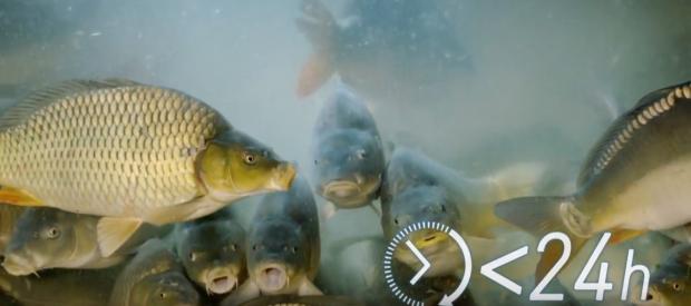 Bio fish kvalitet – uvek pitajte za poreklo ribe koju kupujete